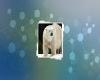ساخت عایق جدید با الهام از موی خرس قطبی